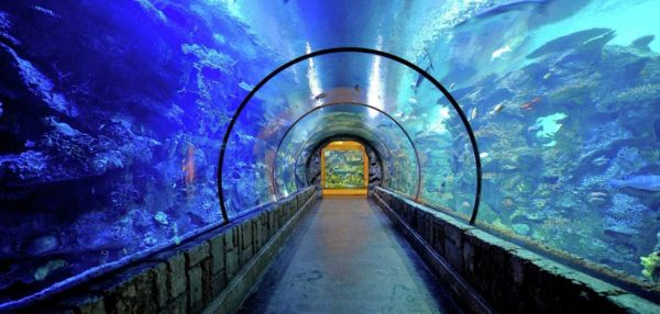 mandalay-bay-amenities-attractions-shark-reef-aquarium-interior-tif-image-1152-550-high